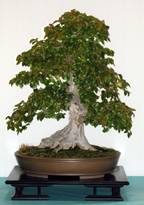 Evergreen Garden works My bible on bonsai…The best info ever for bonsai.